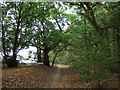 TF6733 : Woodland track, Snettisham by Richard Humphrey