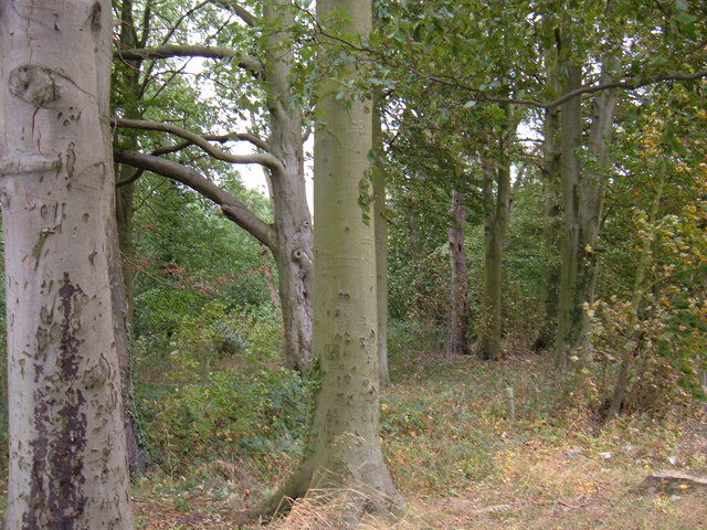 Small Woodland East of Holme-on-the-Wolds