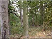 SE9746 : Small Woodland East of Holme-on-the-Wolds by JThomas