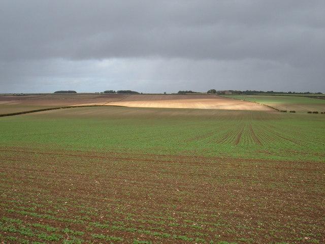 Farmland, Holme Wold