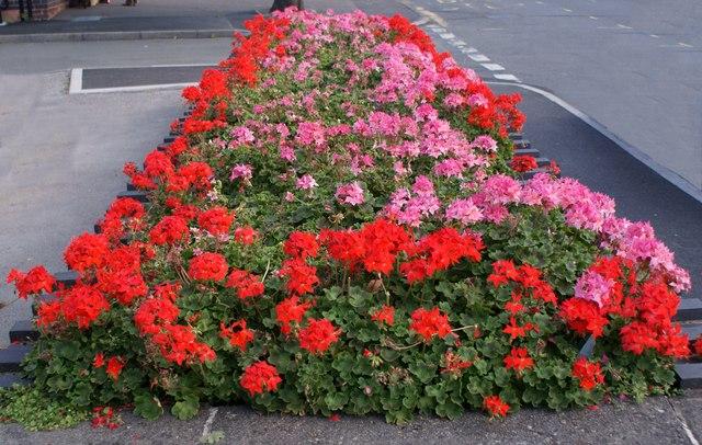 The Princess Diana memorial garden