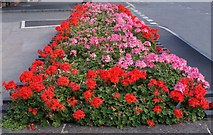 SK6443 : The Princess Diana memorial garden by johnfromnotts