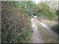 TG3903 : Path to Well Road, Limpenhoe by Evelyn Simak