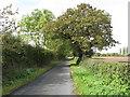 SJ7081 : Winterbottom Lane by Peter Whatley