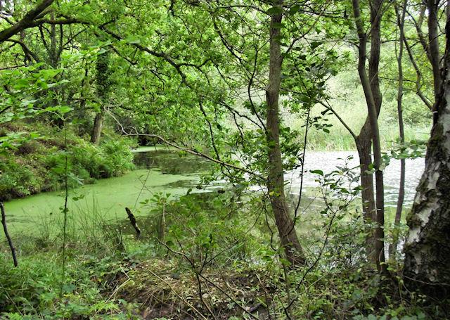 Lake South of Purbeck Way