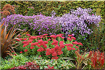 TQ2882 : Floral display in Avenue Gardens, Regents Park by Andy F