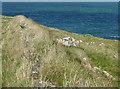 SM8032 : Clifftop wall by Pauline E