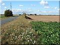 TF4718 : Gunthorpe Road heading towards The River Nene by Richard Humphrey