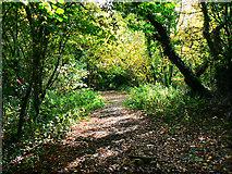 SU1789 : Trackbed, Swindon and Highworth Light Railway, Stanton Park, Swindon (2) by Brian Robert Marshall