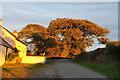 SN0506 : Oak Trees by RAY JONES