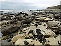 NZ4154 : Rocky shore north of Salterfen Rocks by Andrew Curtis