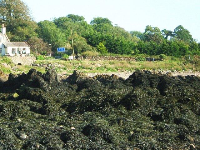 Rocks covered in seaweed