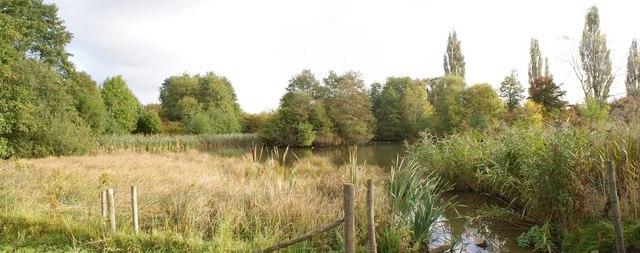 The Lambley Reed Pond