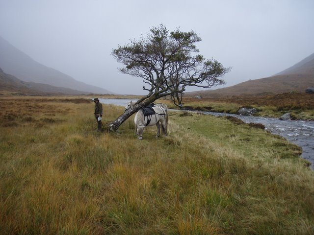 Ghillie and ponies waiting by the leaning tree