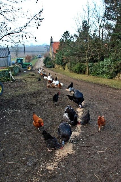 Feeding Time, Bank Foot farm
