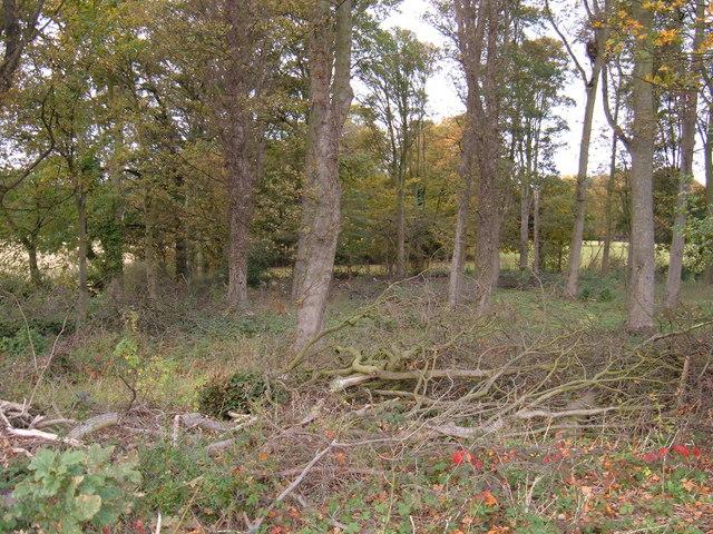 Woodland, Dalton Hall Estate