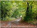 SP1030 : Lane to Cutsdean Lodge by Jonathan Billinger