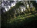SN0034 : Tree-planting in Allt Clyn by ceridwen