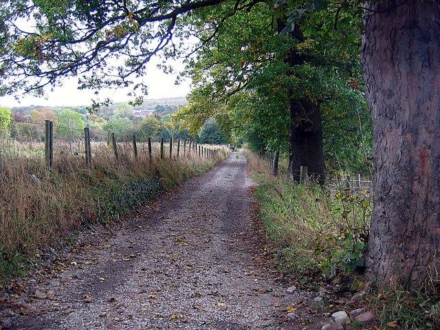 Public Bridleway from Mikwellburn Wood