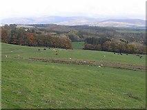NS8200 : Fields below Cleuchhead Farm by Oliver Dixon