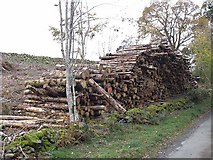 NX8098 : Roadside logpile by Oliver Dixon