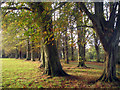 TQ5920 : Autumnal Tree Lined Drive by Oast House Archive