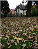 J3271 : Autumn leaves, Drumglass Park by Rossographer