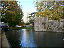 ST5545 : Wells: Bishop's Palace moat by Chris Downer