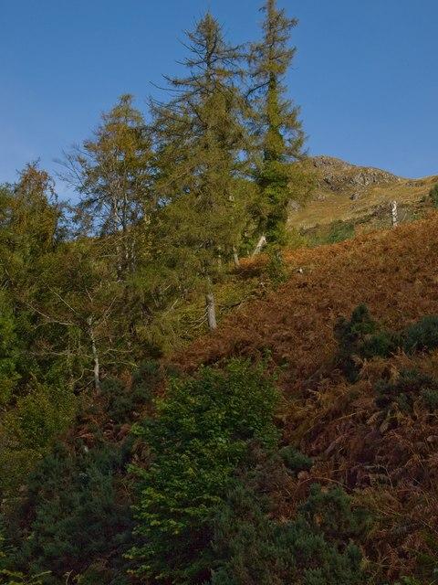 Hillside above Inverinate