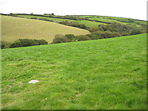SX1595 : Grazing land at Middle Crackington by Philip Halling
