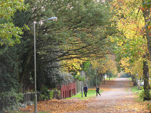 Autumn colours on Putney Park Lane