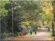 TQ2274 : Autumn colours on Putney Park Lane by Stephen Craven