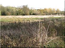 SP3365 : Flood-meadow by Radford Road, Royal Leamington Spa by Robin Stott