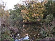 SP3365 : Restored pond, Newbold Comyn Park Royal Leamington Spa by Robin Stott