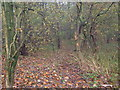 SE8449 : Footpath , Baggaby Hill by JThomas
