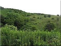 NS3074 : Knocknairs Hill by Richard Webb