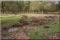 SU2705 : Warwickslade Cutting: the stream flows by Peter Facey