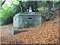 SU6179 : Trees all round by Bill Nicholls