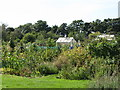 NZ2466 : Allotments south of Forsyth Road by Mike Quinn