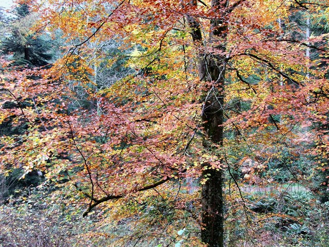 Autumn colour in Eggesford Forest