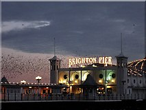 TQ3103 : Brighton Pier and Starlings by Peter Whitcomb