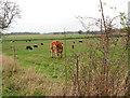 TM3098 : Rosehips beside farm track by Evelyn Simak