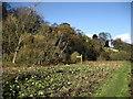 NZ1416 : Teesdale Way below Winston by Chris Heaton