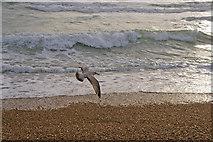 TQ3103 : Shoreline, Brighton by Christine Matthews