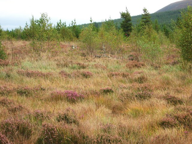 Moss Raploch, looking east
