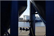 NJ9505 : Harbour Oil Tanks by Bill Harrison