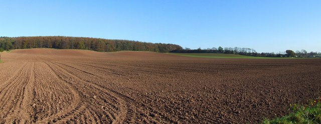 Ploughed field and woods near Oxton