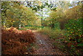 TQ7512 : Path through Fore Wood by N Chadwick