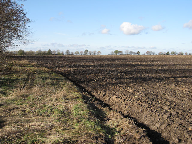 Coldham Field