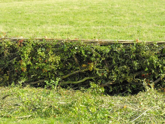 Hedging competition (3)